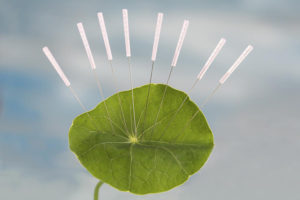 Green leaf with acupuncture needles
