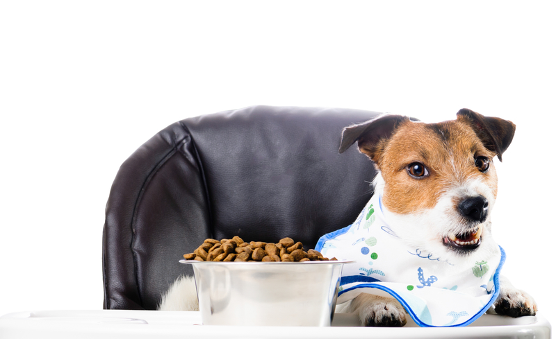 6 Signs Your Pet Has Allergies and What You Can Do About It